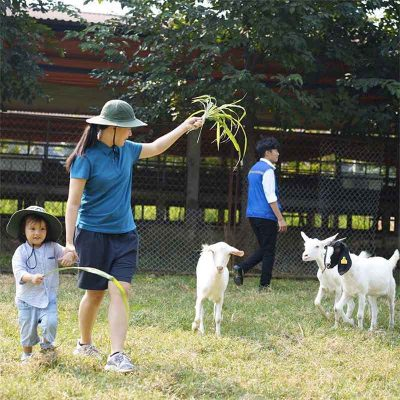 Working Farm - Nông trại thực nghiệm giúp trẻ rèn luyện kỹ năng sống